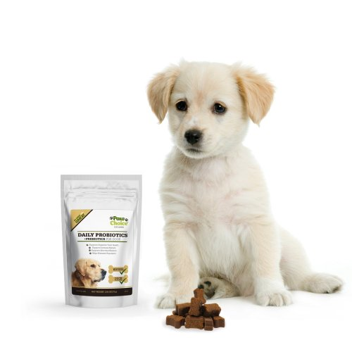 probiotics for dogs 2