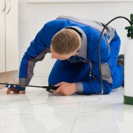 Peace of Mind with Home Extermination