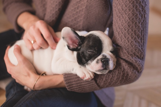 There's a lot to consider before bringing a new pet home. Here are 5 Important Things To Know Before You Buy a Dog for your family.