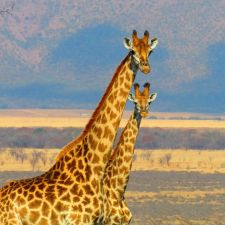 The Best Safari Holidays in the World