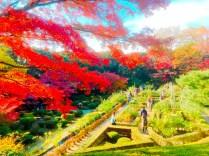 紅葉旧古河庭園〜ライトアップ六義園10