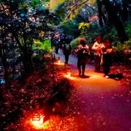 紅葉旧古河庭園〜ライトアップ六義園15