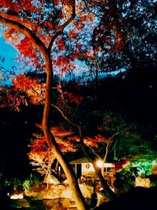 紅葉旧古河庭園〜ライトアップ六義園17