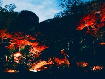 紅葉旧古河庭園〜ライトアップ六義園18