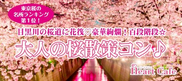 目黒川桜道01