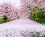目黒川桜道03