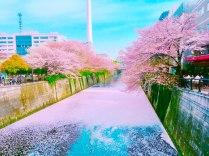目黒川桜道05