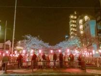 夜の目黒川桜06
