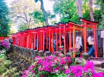 根津神社つつじ祭り08