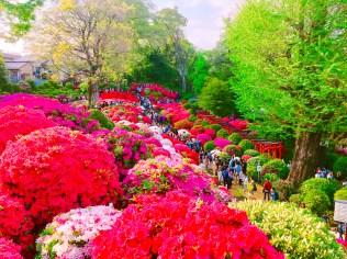 根津神社つつじ祭り06