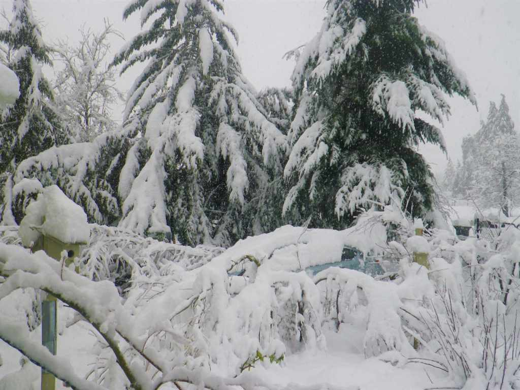 Snow covered trees and car in Elkton Oregon during the snowpocalypse of 2019
