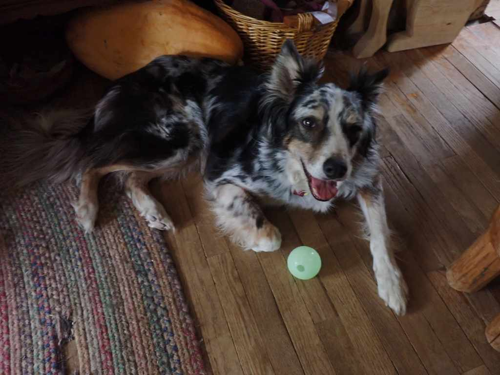 Happy dog lying on living room floor with ball nearby.