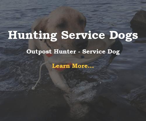 Outpost Hunter - Service Dog
