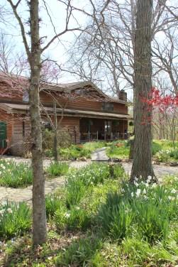 Diana Lockwood's woodland garden