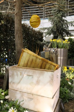 Home gardeners are adding backyard beehives to help with the pollinator shortage.