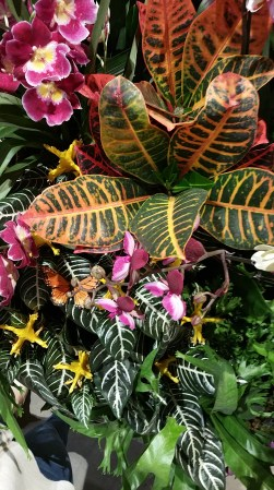 Crotons and orchids
