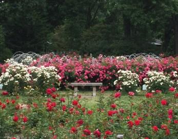 Heartlandgardening Three Gardeners Celebrate The Region