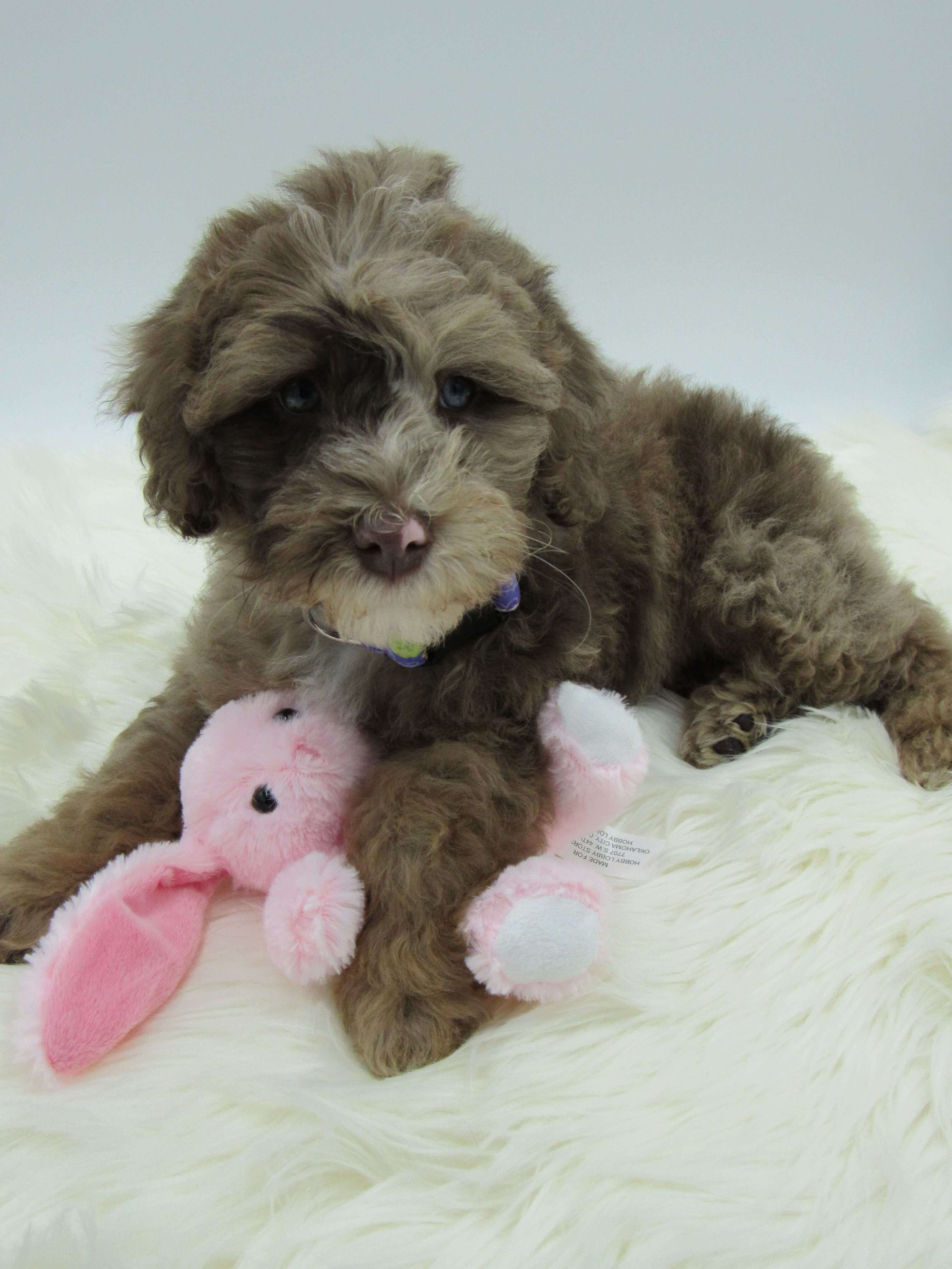 Lucy as a puppy with a stuffed bunny