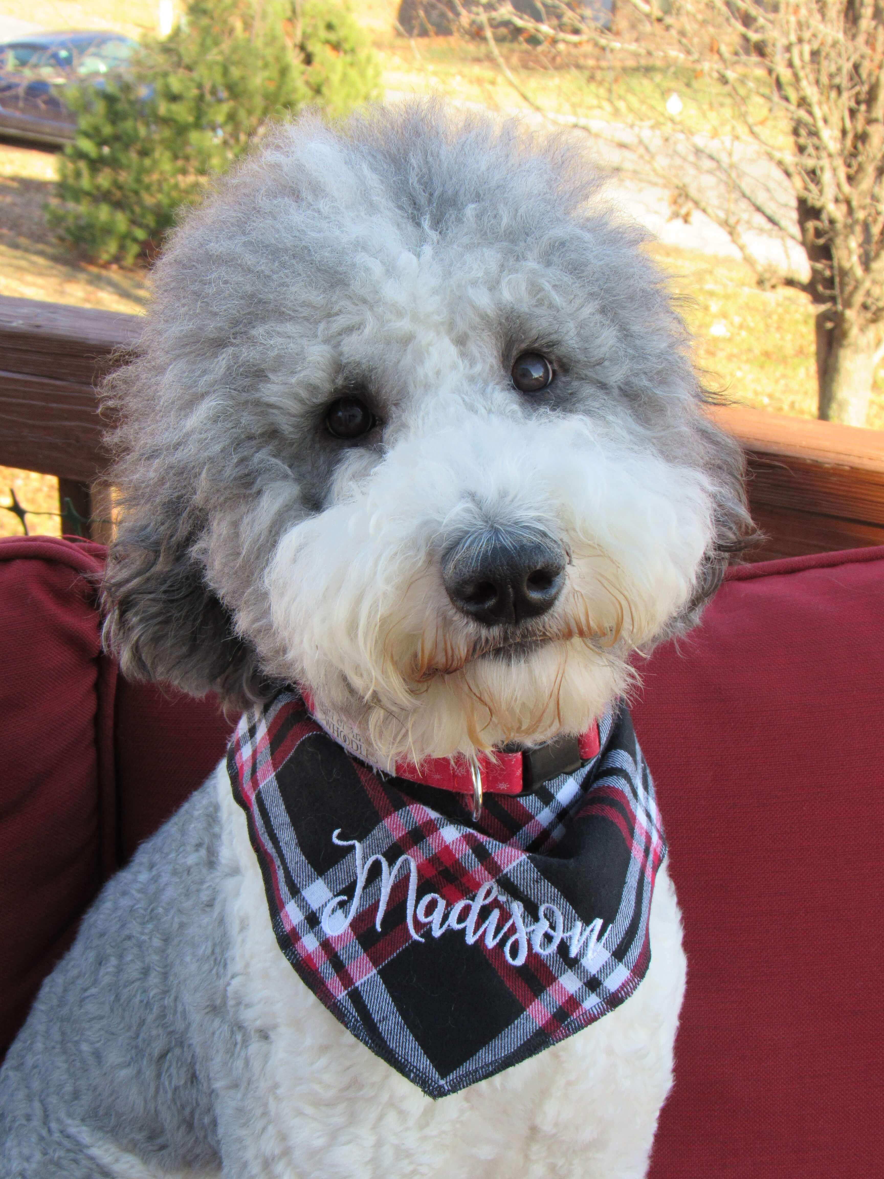 Madison wearing a plaid bandana