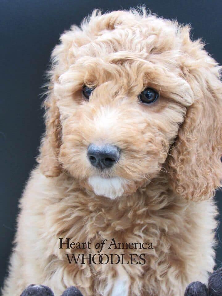 McKinley as a puppy