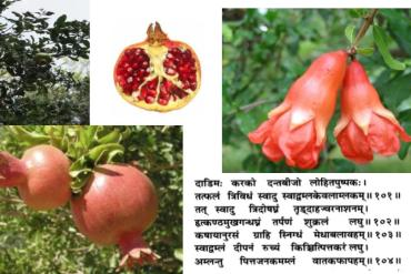 Comment manger et profiter des bénéfices de l'alimentation selon l'Ayurveda.