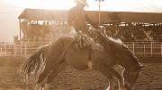 Collegiate Peaks Stampede Rodeo