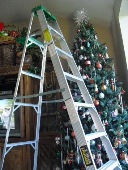 Ladder in front of tree