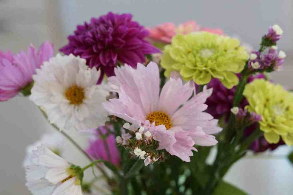 cut flower bouquet with pink and white cosmos, lime zinnias, and pink dahlias