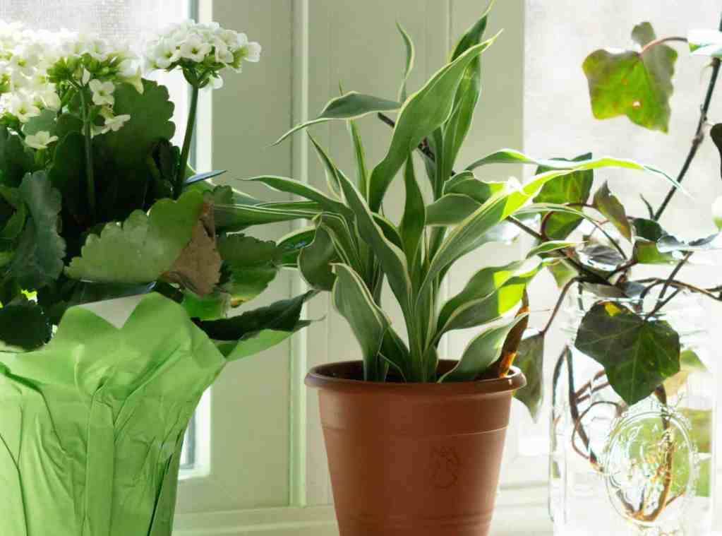 plants on windowsill for sustainable bathroom
