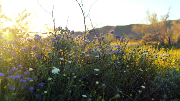 "A rare ""super bloom"" of wildflowers is happening right now in the Southern California desert and its said to be unlike anything seen in the area in nearly 20 years."