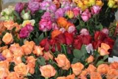 Roses on Mackinac Island, Michigan