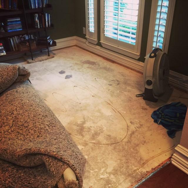 Soggy Carpets