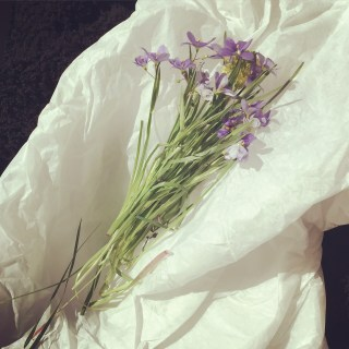 Gift of wild flowers