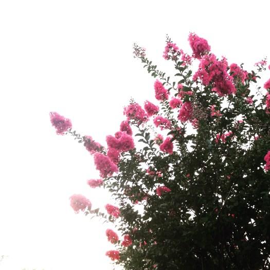 Gratitude grows a garden ~ Crystal Gornto | HeartStories