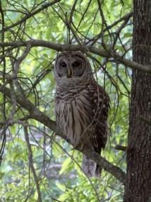 April: Owl Pays A Visit