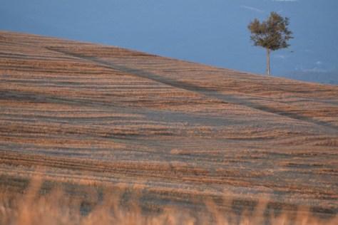 hww-corduroy-field