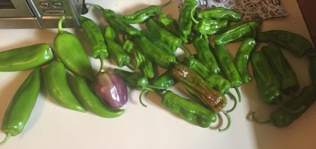 Shishito pepper with bell