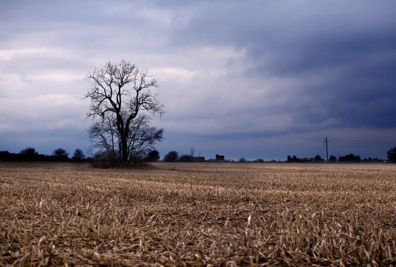 366-day-16-tree-in-field