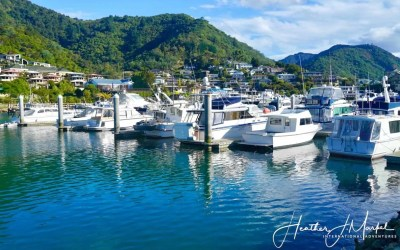 To Picton By Train – Discover New Zealand