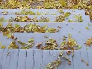 fall_steps
