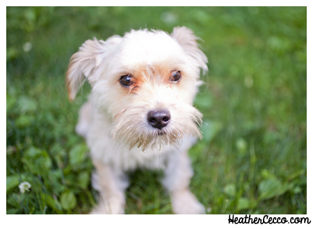 dog-pet-photography-spca-1
