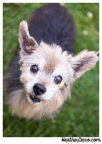 dog-pet-photography-spca-3-2