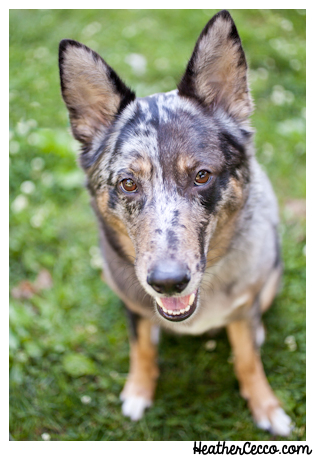 dog-pet-photography-spca-5-2