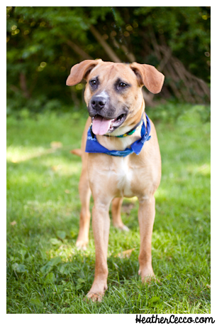 dog-pet-photography-spca-7