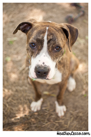 dog-pet-photography-spca-8