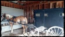 Mennonite horse at Walmart