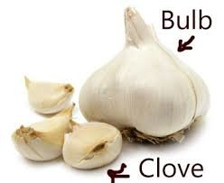 a bulb and clove of garlic