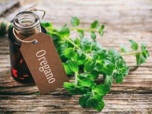 Oregano Oil Uses #heatherearles #herbnwisdom #naturalliving #healthblogger #podcaster #oregano #italiandishes #herbels #spiderbites