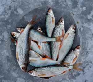 Omega-3 fish #heatherearles #herbnwisdom #naturalliving #podcast #healthblogger #author #smallfish #omega3 #farmgirl