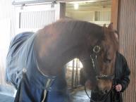 Kentucky Derby winner Funny Cide